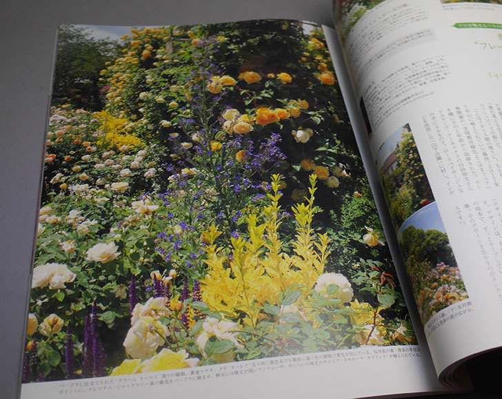 New-Roses-SPECIAL-EDITION-for-2020-vol.26を買った3.jpg